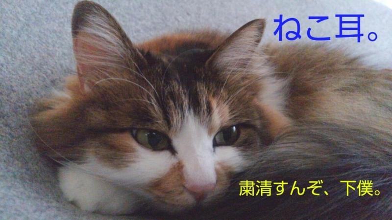 c0181639_15240337.jpg