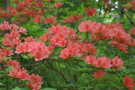 花の季節_f0114346_644125.jpg