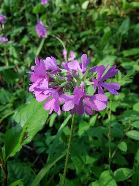 花の季節_f0114346_7195267.jpg