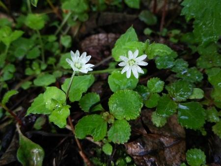 花の季節_f0114346_7225489.jpg