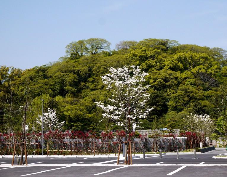 花のある風景_b0093754_1415062.jpg