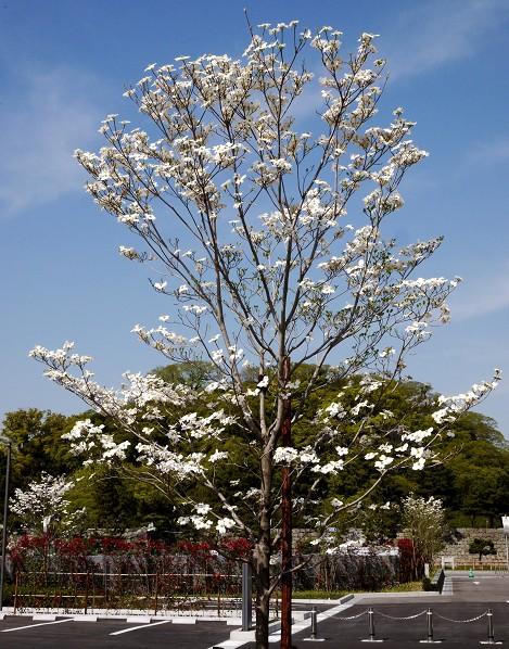 花のある風景_b0093754_14152079.jpg