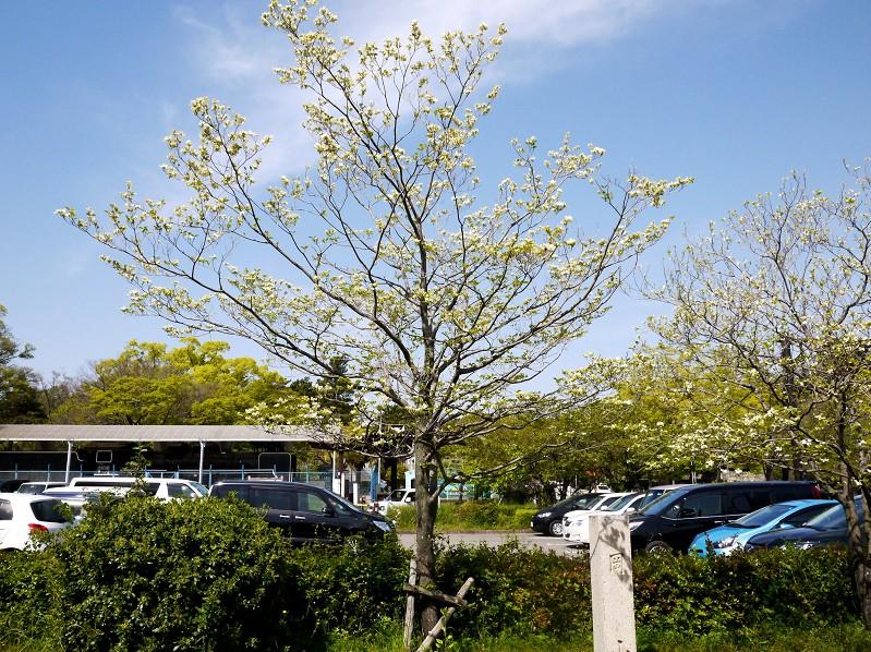 花のある風景_b0093754_14154347.jpg