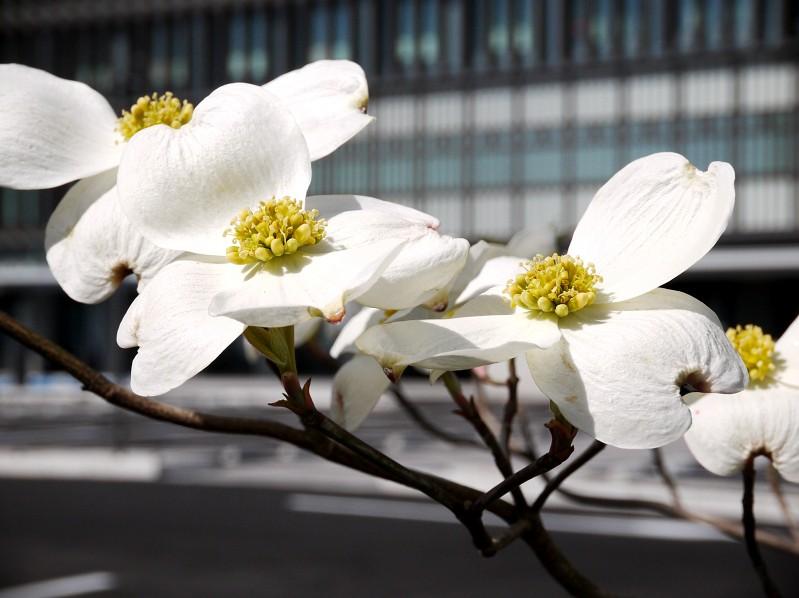 花のある風景_b0093754_14162046.jpg