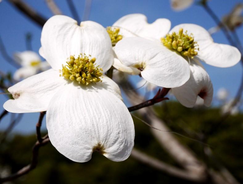 花のある風景_b0093754_14163838.jpg