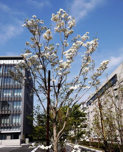 花のある風景_b0093754_1416389.jpg
