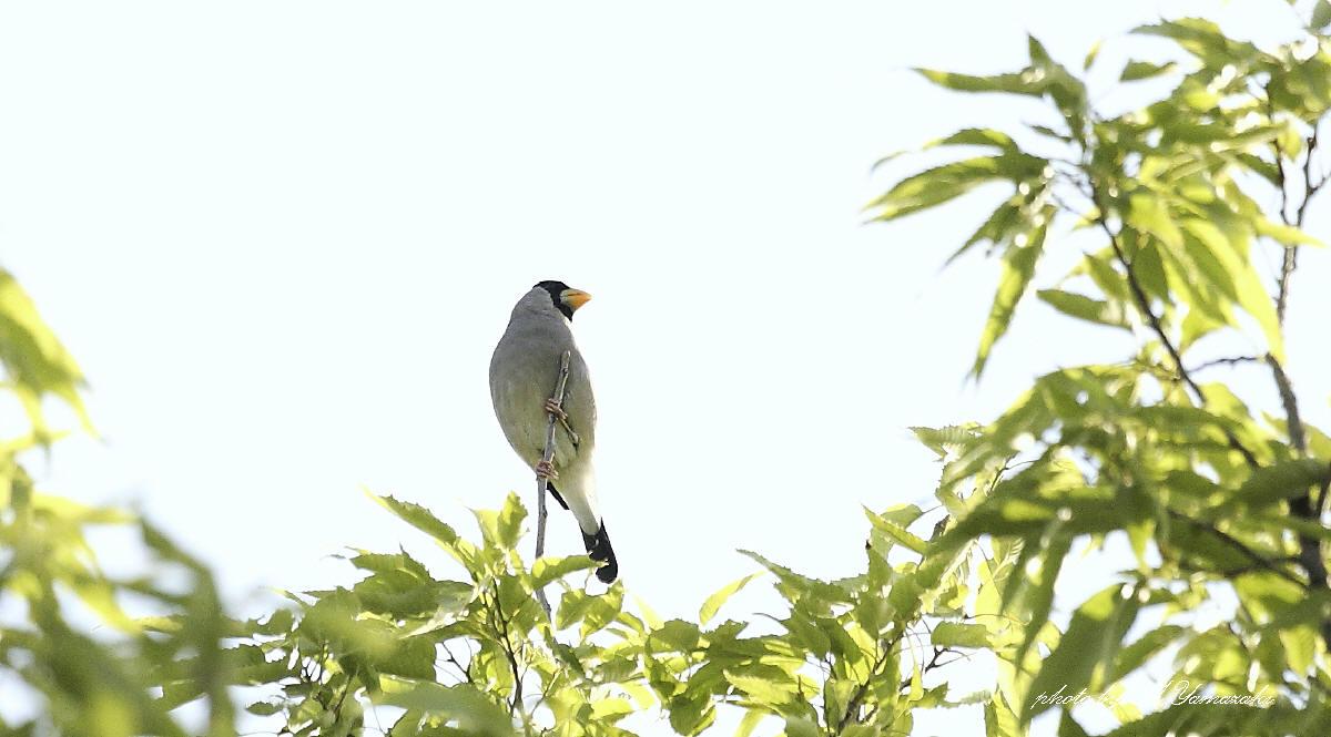 通り過ぎて行く鳥達_c0217255_1721054.jpg