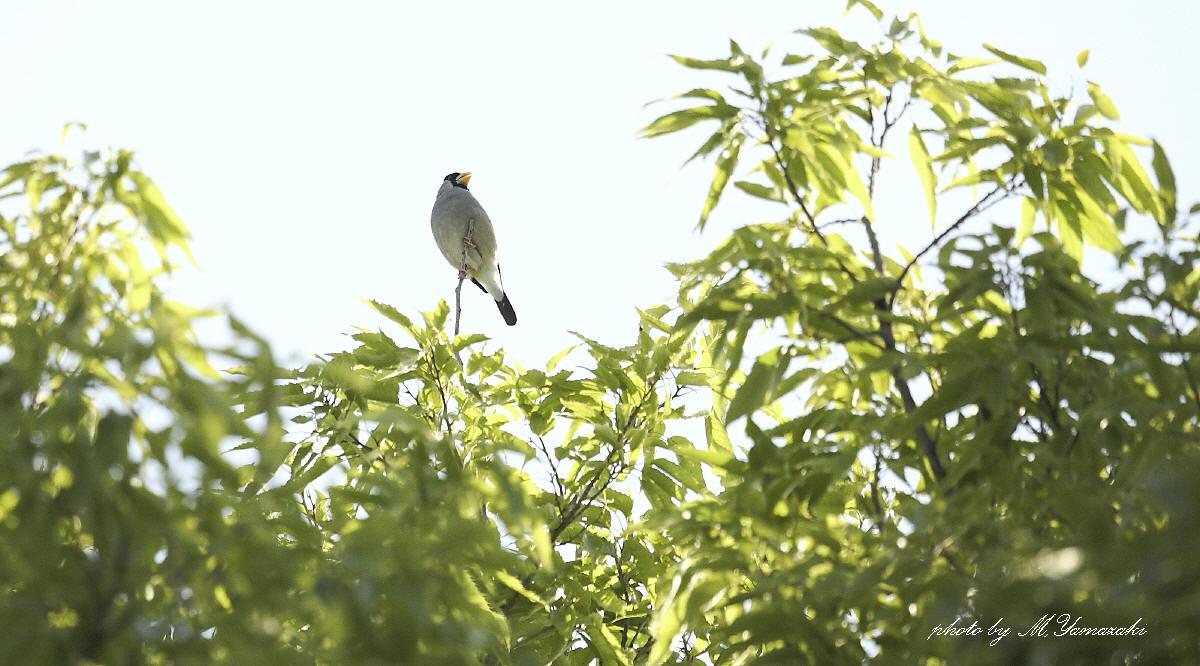 通り過ぎて行く鳥達_c0217255_172223.jpg
