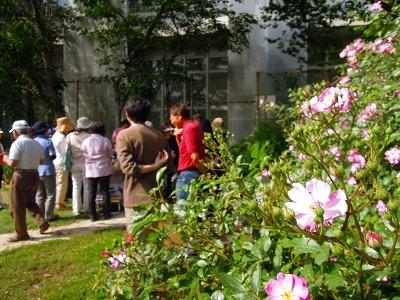 5月10日バラの季節の月例作業&お花見会_a0094959_22534459.jpg
