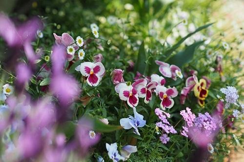 いちばん好きな花畑_a0292060_02164326.jpg