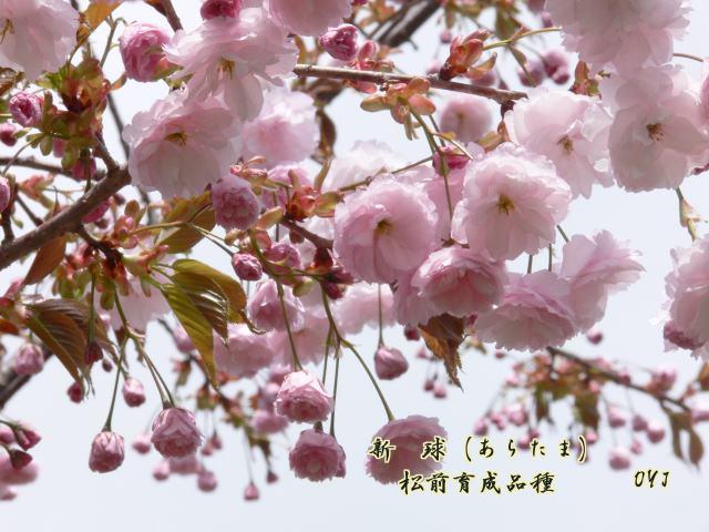 f0166871_7463883.jpg