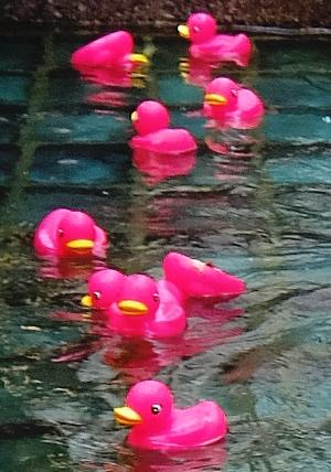 ロックフェラーセンターの噴水に謎のピンクのラバー・ダックいっぱい_b0007805_20505456.jpg