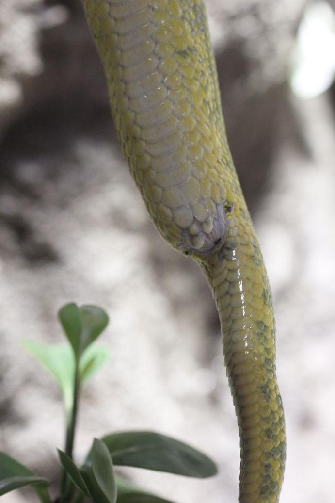 どこから は の 蛇 尻尾
