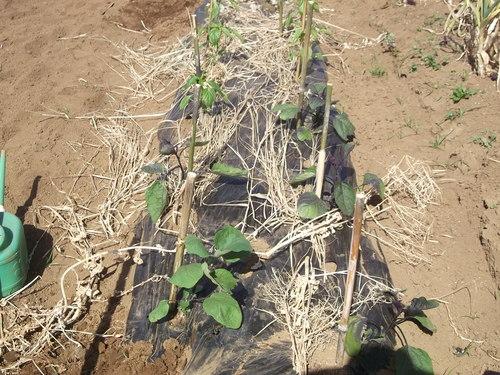ジャガイモの土寄せ&支柱つくり_b0137932_17343425.jpg