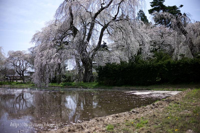 安養寺の桜(3)_d0108132_21534471.jpg