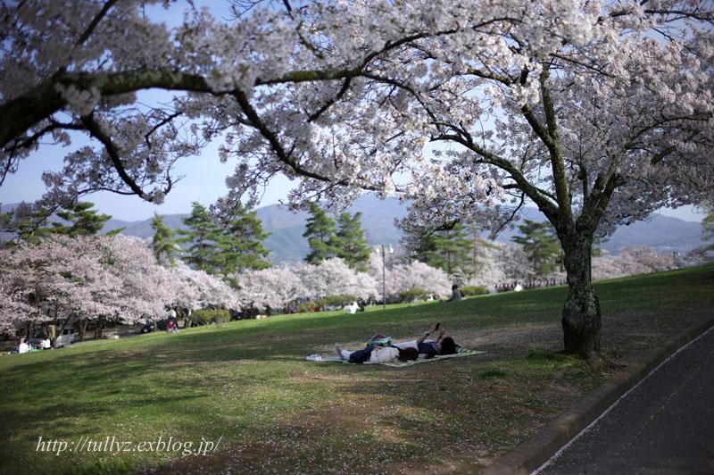 城山公園の桜(2)_d0108132_227194.jpg
