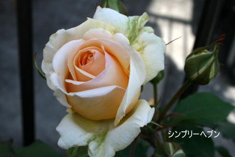 b0197433_16102598.jpg