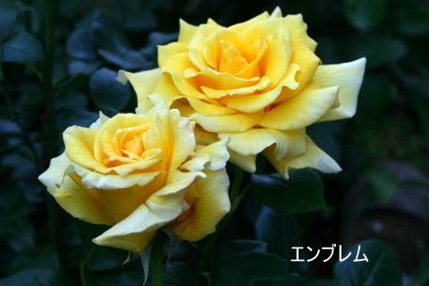 b0197433_1684989.jpg