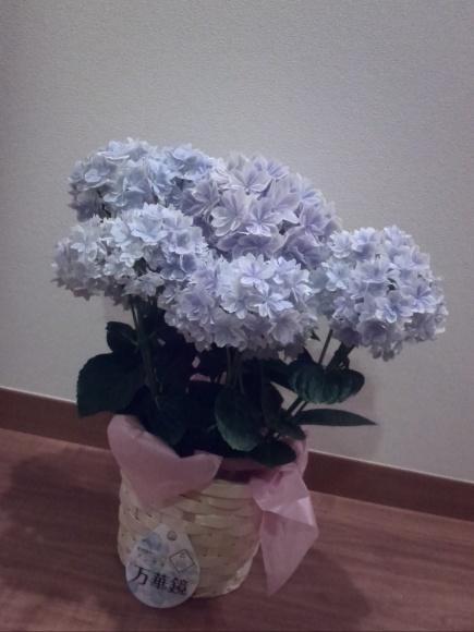 母の日のプレゼントはフラメンコのチケット!!_f0340942_00012473.jpg