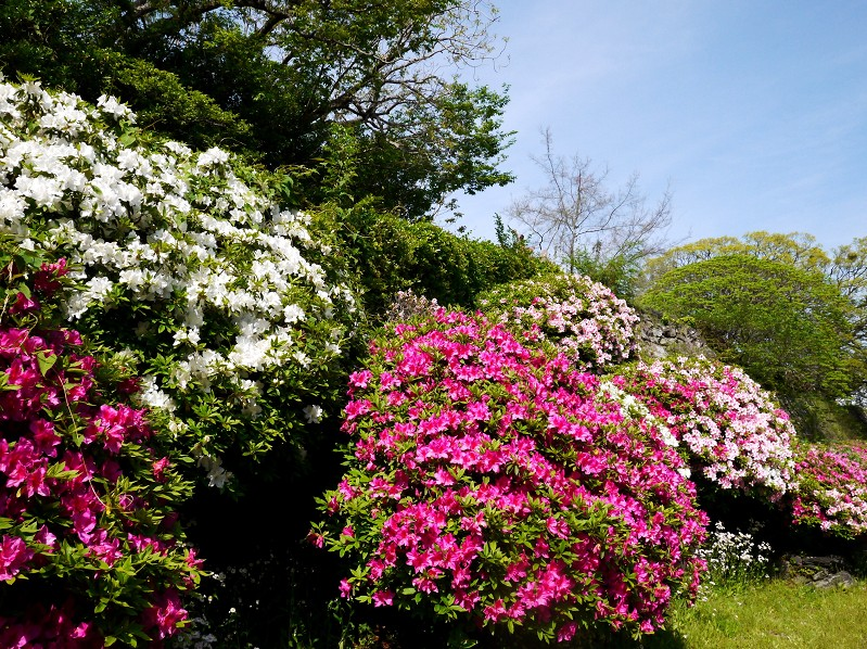 花のある風景_b0093754_17432823.jpg