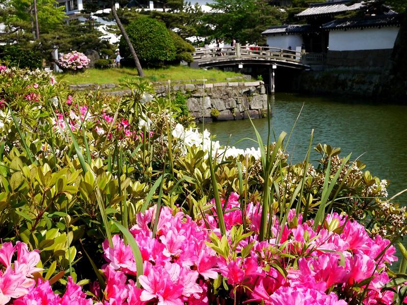 花のある風景_b0093754_17443722.jpg