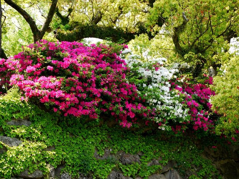 花のある風景_b0093754_17481071.jpg
