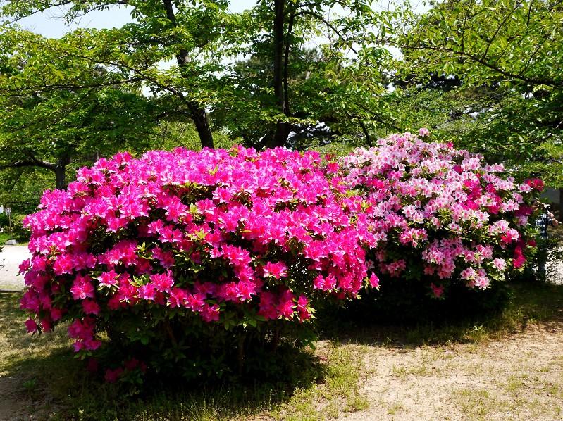 花のある風景_b0093754_1810545.jpg