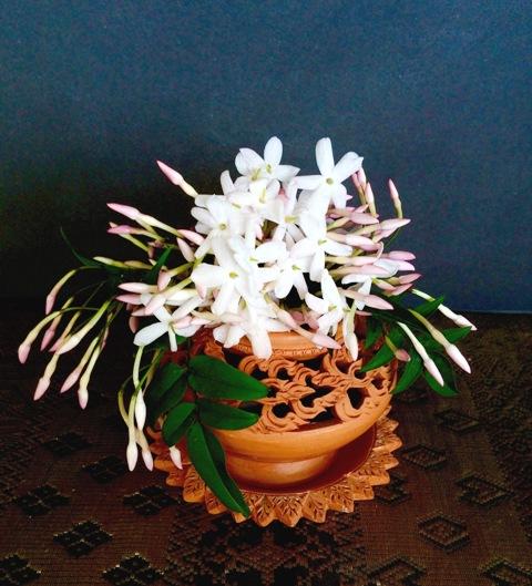 母の日・香しいジャスミンに中国民謡 『茉莉花』(モーリーファ)を口ずさむ♪_a0138976_1616393.jpg