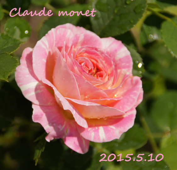 c0139591_10341215.jpg