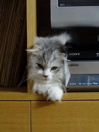 ザゴーサ系のお花と相変わらずの猫。。_c0178104_08050914.jpg