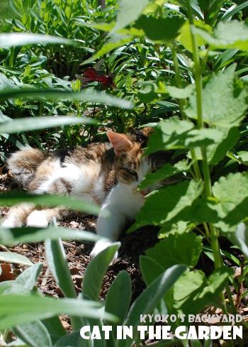 花壇の中に潜む猫_b0253205_05571056.jpg