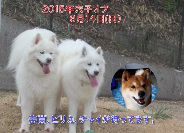 b0073110_15365147.jpg