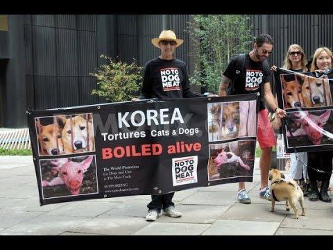 台湾人が「朝鮮人の火病をヤクルトで治した!?」:本当なら、ノーベル平和賞もんだヨ!_e0171614_14111640.jpg