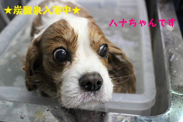 突然のスイッチ!!_b0130018_20235996.jpg