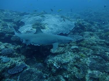 シークレットポイント~サメに好かれる~_b0124144_1615521.jpg