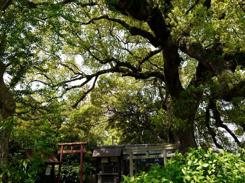 和歌山城公園にて_b0093754_20165223.jpg