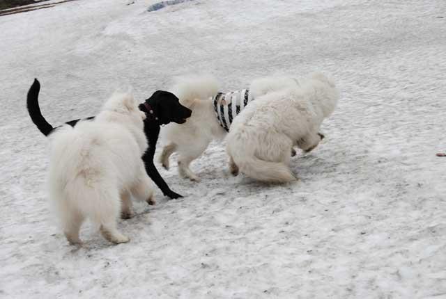 みなみちゃん地方で雪遊び_b0120492_12425643.jpg