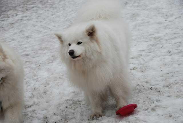 みなみちゃん地方で雪遊び_b0120492_12452849.jpg