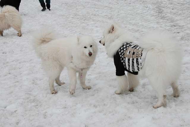みなみちゃん地方で雪遊び_b0120492_12481420.jpg