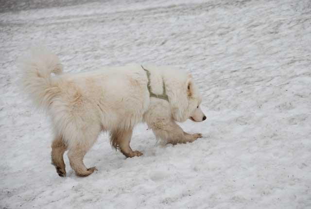 みなみちゃん地方で雪遊び_b0120492_12541210.jpg