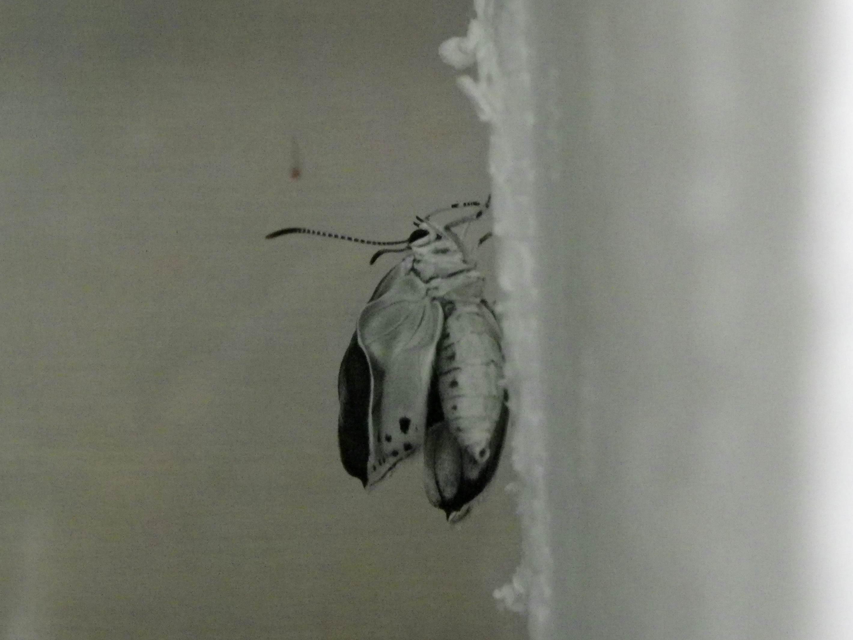 ウラゴマダラシジミの放蝶 5月13日_d0254540_16591634.jpg