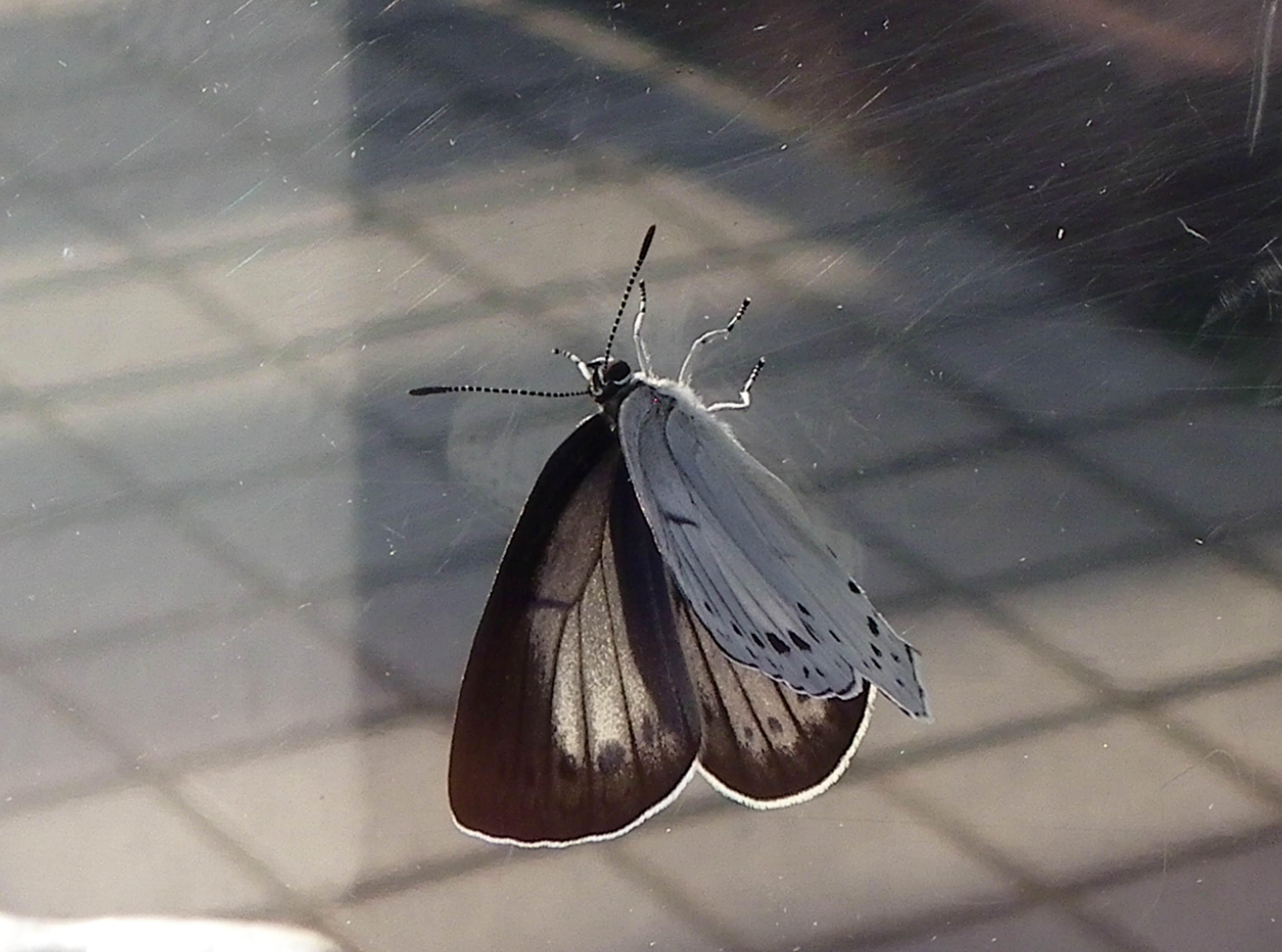 ウラゴマダラシジミの放蝶 5月13日_d0254540_1753446.jpg