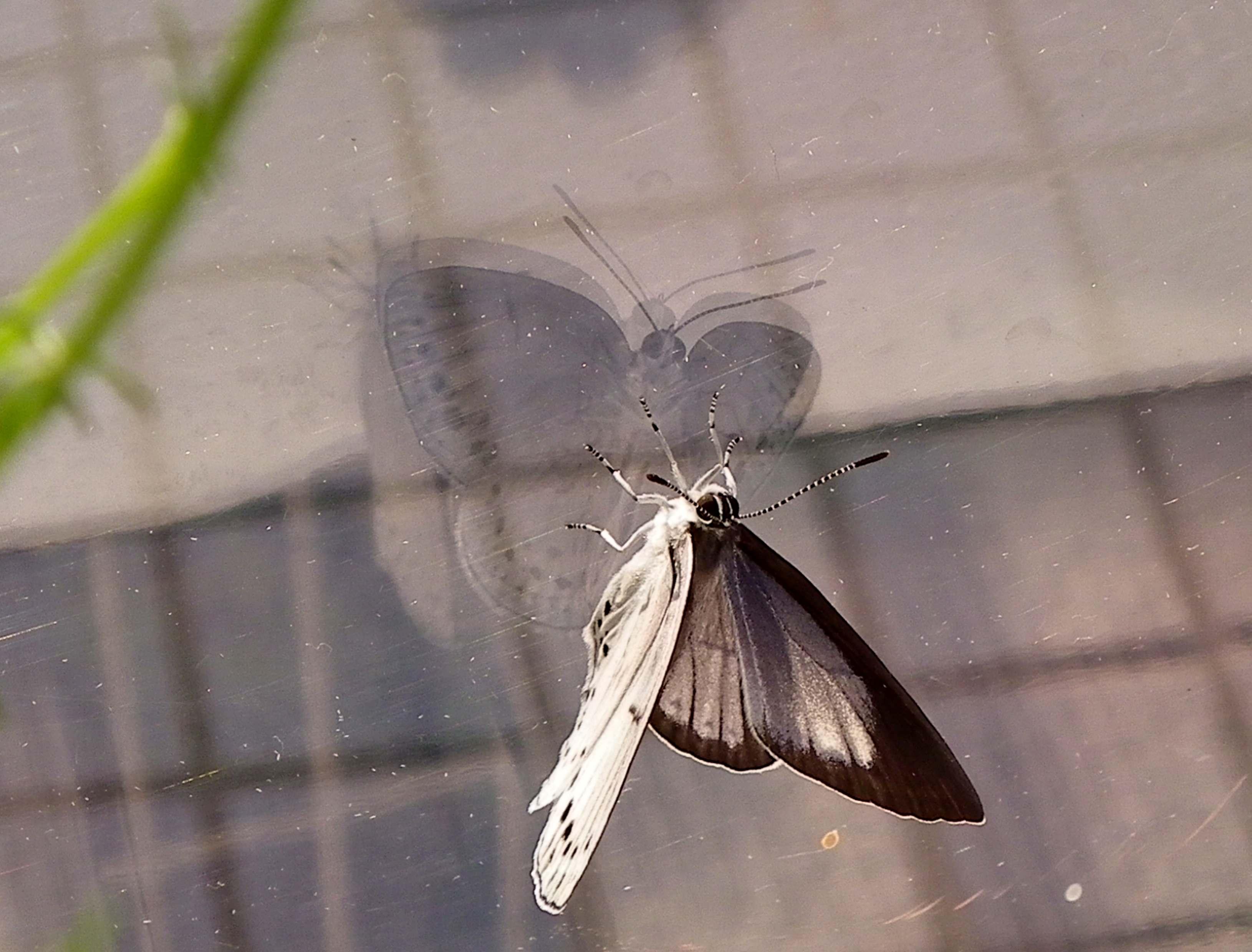 ウラゴマダラシジミの放蝶 5月13日_d0254540_17547.jpg