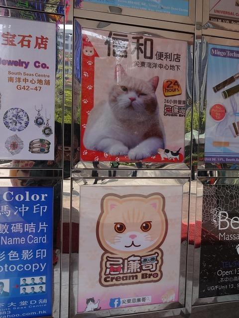 香港で1番有名な猫_b0248150_08531547.jpg