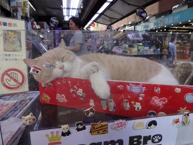 香港で1番有名な猫_b0248150_08540106.jpg
