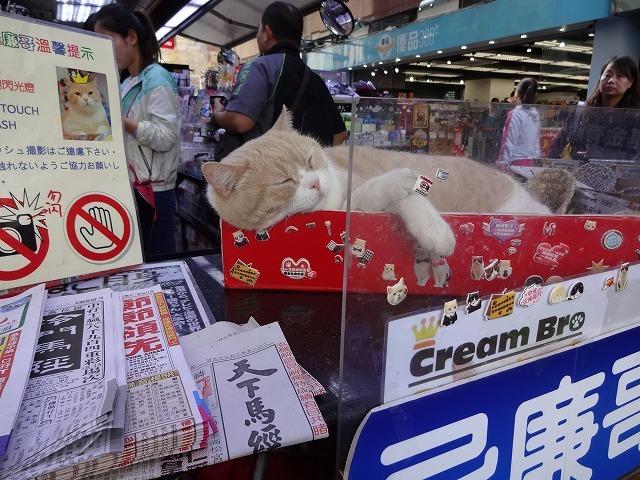 香港で1番有名な猫_b0248150_08565408.jpg