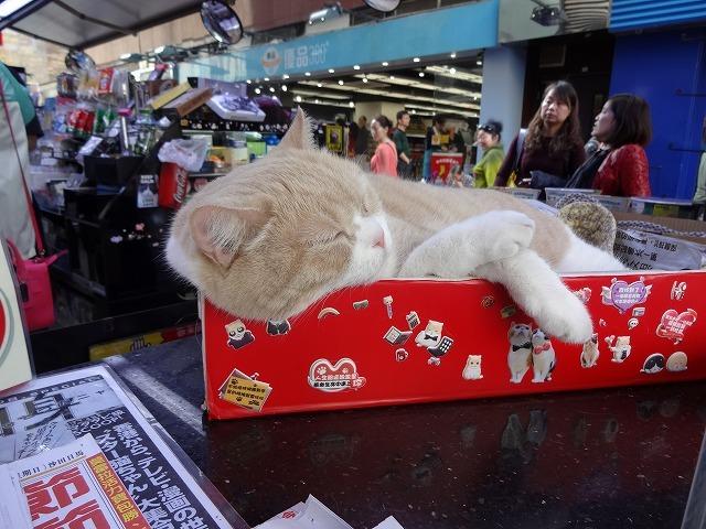 香港で1番有名な猫_b0248150_08581949.jpg