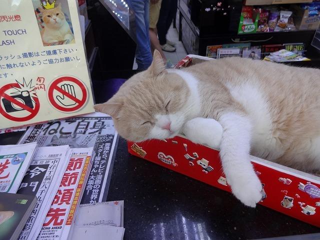 香港で1番有名な猫_b0248150_09051706.jpg