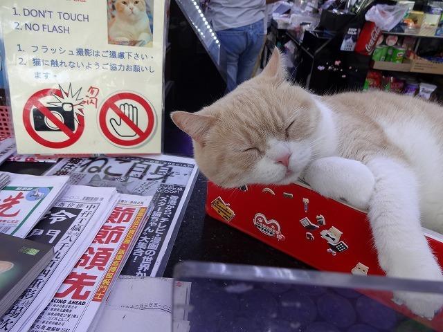 香港で1番有名な猫_b0248150_09060993.jpg