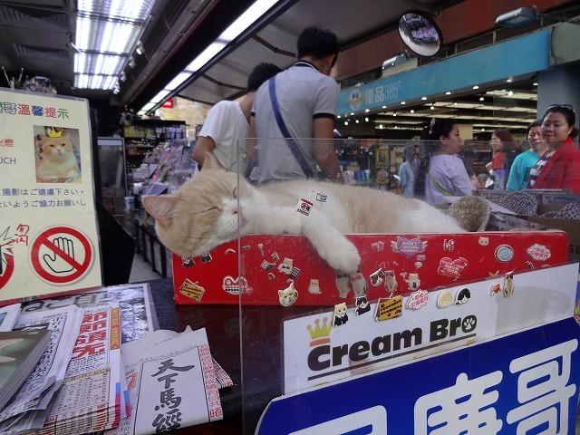 香港で1番有名な猫_b0248150_09075387.jpg
